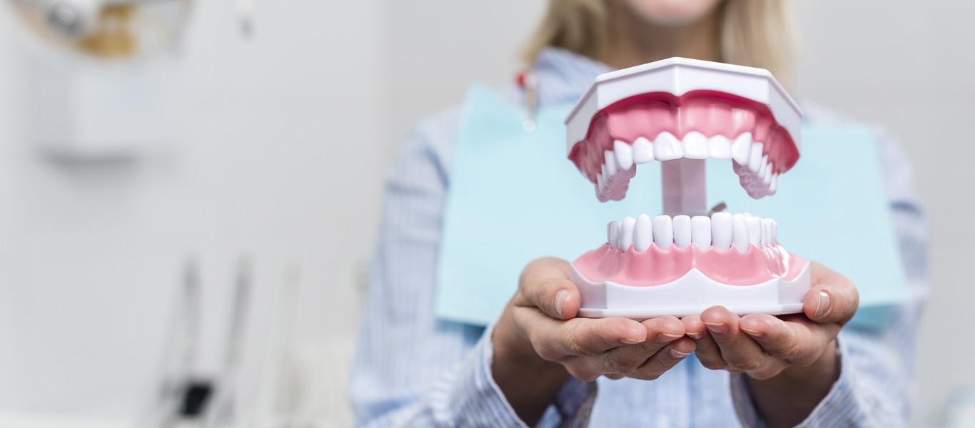 Dental Patient holding teeth model